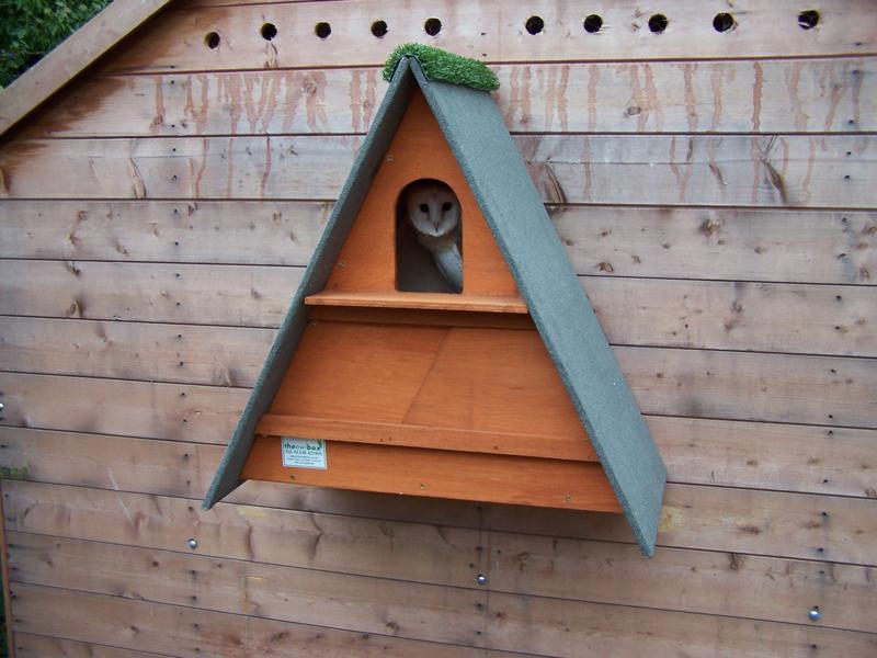 Golden Brown Barn Owl Box - The Owl Box